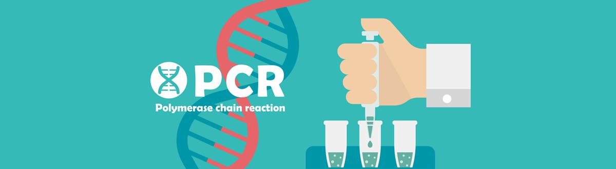 PCRという検査は何をする検査?